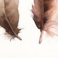 Feathers No 2 Print of Watercolor by amberalexander on Etsy