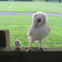 Barn owl by HandmadeByNovember on Etsy