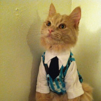 Sweater vest with collar and tie- cat clothes