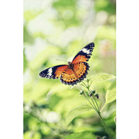 Butterfly Photography. Spring photo. monarch. insect photography. green. orange. nature. dreamy. home decor