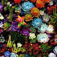ThatBohemianGirl - Succulents