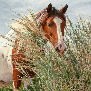 Beautiful horse on the beach, wild horse, from lmlphoto on ...