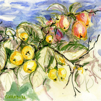 "Saatchi Online Artist: Alexandra Cook; Pen and Ink, 2011, Drawing ""Nans Crab Apples"""