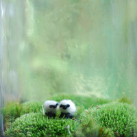 irish landscape with wee wool sheep terrarium