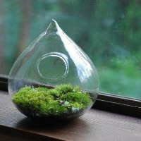woodland in a raindrop by weegreenspot on Etsy