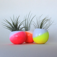Neon Ombre Air Plant Planter Trio with Air Plants - Neon pink, neon orange and neon yellow