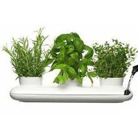 Trio Herb Pot ? ACCESSORIES -- Better Living Through Design