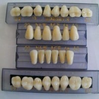 Halloween Horror Prop - Dental Quality Resin Teeth for Prop Building!:Amazon:Everything Else