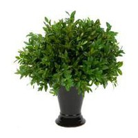 BOXWOOD BALL IN BLACK URN (delivery included)  | SHOP FLORAL  | floral  | Jayson Home & Garden