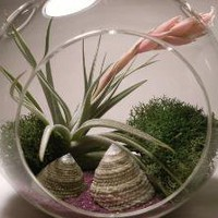 Flowering Tillandsia Globe by TheTropicalGarden on Etsy