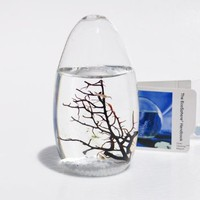 Amazon.com: EcoSphere Closed Aquatic Ecosystem, Small Pod: Pet Supplies