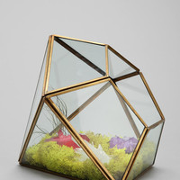 Magical Thinking Geo Terrarium- Gold One
