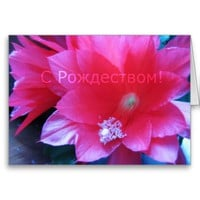 Russian Merry Christmas Card, Christmas Cactus