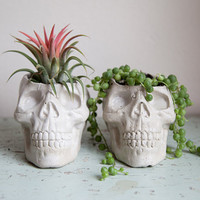 Skull Planter - Halloween, garden decor