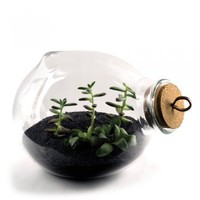 Xtra Terrarium : Branch: Sustainable Design for Living