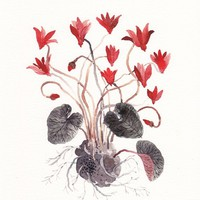 Red Cyclamen - Archival Print