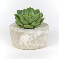 Concrete Planter, modern home decor, office planter