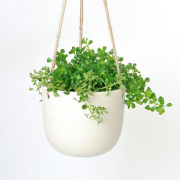 Scribble Hanging Planter | KOROMIKO