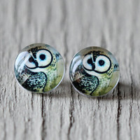 Owl Stud Earrings : Natural Green, Black and Brown Glass Stud Earrings, Fake Plugs, Beach, Summer, ArtisanTree, Zoo, Bird