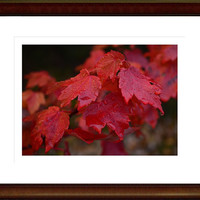 Autumn Photography,fall leaves,seasons,home decor,claret,crimson leaves,brilliant autumn foliage,jewel tones,stunning garnet,ruby red