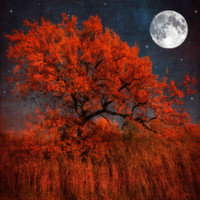 Halloween Color Photographic Print by Philippe Sainte-Laudy at Art.com