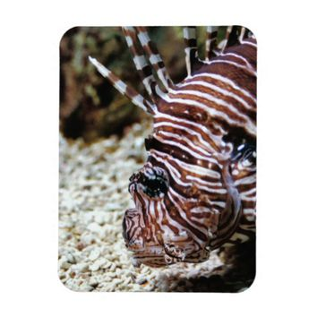 The Profile of a Lionfish Premium Magnet