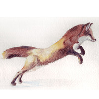 Jumping Red Fox Illustration