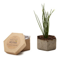 Diy Hexagonal Chive Planter Kit