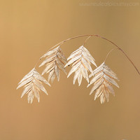 Sea Oats seed photo, macro photography, tan and brown, contemporary wall decor