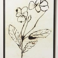 Pen  Ink Violas-Anthropologie.com