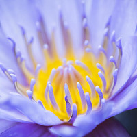 Gentle Blue Photograph by Priya Ghose - Gentle Blue Fine Art Prints and Posters for Sale