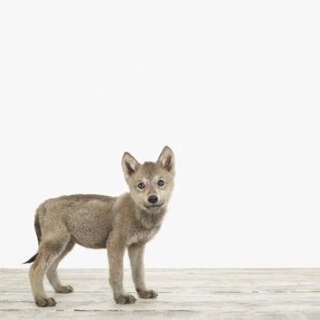 Wolf Pup No. 2 - The Animal Print Shop by Sharon Montrose