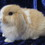 puppylover109