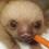 sloth_lover_1029